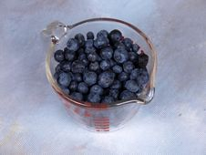 Free Blueberries Royalty Free Stock Photography - 2915647