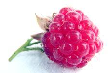 Free Raspberry Stock Photos - 2915883