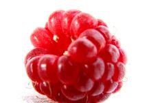 Free Raspberry Royalty Free Stock Photo - 2915905