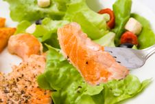Grilled Salmon With Lettuce 13 Royalty Free Stock Photos