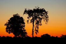 Free Trees And Sunrise Stock Photos - 2918753