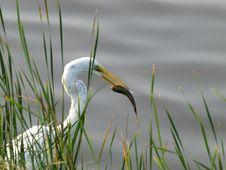 Free Bird Spears Fish Stock Photos - 2919693