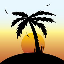 Free Tropical Sunset And Palm Tree. Royalty Free Stock Image - 29107576