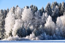Free Winter Forest Royalty Free Stock Photography - 29108977