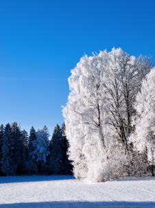 Free Frost Covered Trees Royalty Free Stock Photography - 29109217