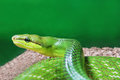 Free Green Snake Stock Photos - 29118233