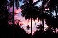 Free Palms And Sky Stock Image - 29118261