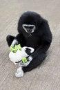 Free Monkey Feeding Guineapig Royalty Free Stock Images - 29118559