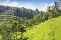 Free Beauty Rice Terrace Stock Images - 29118784