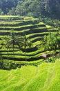 Free Beauty Rice Terrace Stock Image - 29118971