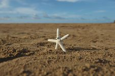 Free Starfish On Sandy Beach With Two Wedding Bands Stock Photography - 29114022