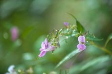 Free Colorful Lavender Flowers With Dew Drops Royalty Free Stock Photos - 29114068