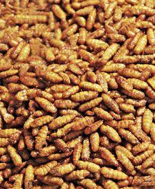 Free Fried Larvaes Royalty Free Stock Images - 29117969