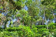 Free Deep Tropical Forest Stock Image - 29117991