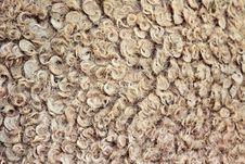 Free Natural Camel Wool Stock Photos - 29118073