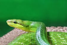 Free Green Snake Stock Photos - 29118233