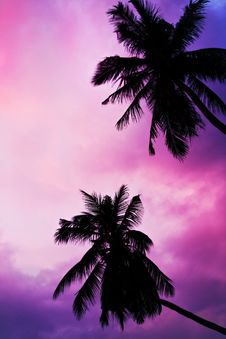 Free Palms And Sky Stock Image - 29118251