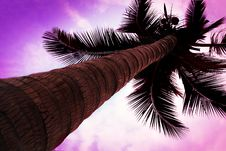 Free Palm On Sky Royalty Free Stock Photo - 29118535