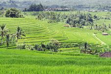 Free Beautiful Rice Terraces Stock Images - 29118844