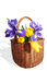 Free Big Wicker Basket With The Spring Flowers Royalty Free Stock Photography - 29112867