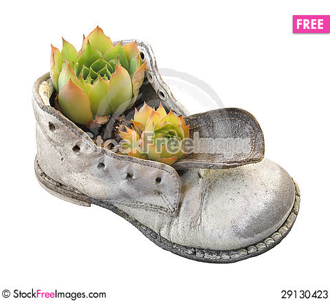 Free Old Baby Shoe And Plant Isolated Stock Photos - 29130423