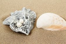 Free Two Pearl Earrings And Shells On Sand Royalty Free Stock Photography - 29130347