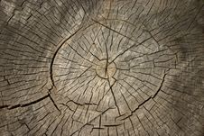 Free Wooden Old Stump Royalty Free Stock Photo - 29136975