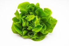 Free Fresh Lettuce Stock Image - 29138161