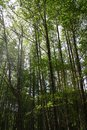 Free Forest With Sunshine Stock Photo - 29143420