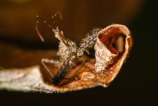 Free Stink Bug Royalty Free Stock Image - 29142936