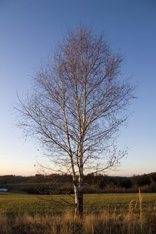 Free Birch In Autumn Stock Photos - 29147313