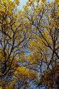 Free Yellow Flowers. Stock Image - 29151291
