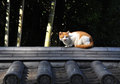 Free Stray Cat In Kyoto Stock Images - 29152994