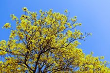 Free Yellow Flowers. Royalty Free Stock Image - 29151326