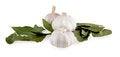 Free Bay Leaf And Garlic Royalty Free Stock Image - 29167506