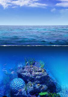 Free Corals Stock Photos - 29160533