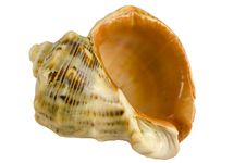 Free Seashell Stock Images - 29167734