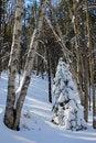 Free Winter Trees Stock Photo - 29174100