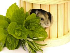 Free Hamster Stock Photos - 29184753
