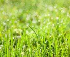 Free Abstract Green Natural Background Royalty Free Stock Images - 29190049