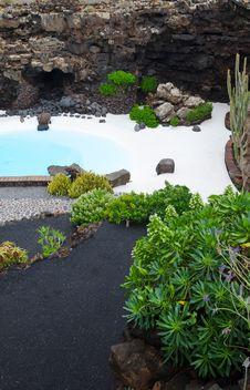 Tropical Pool Plants Stock Photography