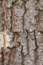 Free Oak Tree Bark Stock Photos - 2920973