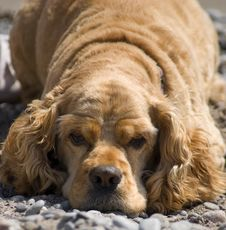 Dog Days Of Summer Royalty Free Stock Photo