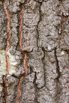 Free Oak Tree Bark Stock Photos - 2920973
