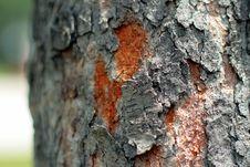 Free Hardwood Tree Bark Stock Photo - 2921010