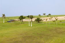 Free Palms On Golf Course Stock Image - 2921111