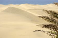 Free Palm And Sand Dunes Stock Photography - 2921552