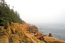 Free Foggy Maine Coastline Royalty Free Stock Photo - 2922135