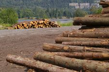 Free Timber Royalty Free Stock Images - 2924229