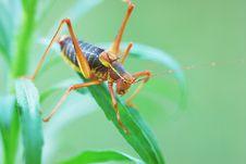 Free Locust Stock Image - 2925111